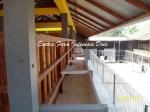 gambar kandang kambing ras Kaligesing _11 Exotics Farm Indonesia