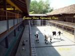 gambar kandang kambing ras Kaligesing_16 Exotics Farm Indoneisa