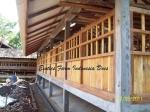 gambar kandang kambing ras Kaligesing_4 Exotics Farm Indonesia