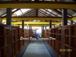 gambar kandang kambing ras Kaligesing_7 Exotics Farm Indonesia