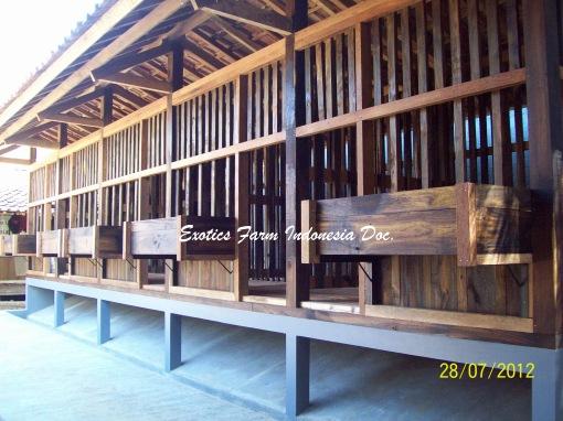Model Kandang Kambing Etawa Jantan_6 Exotics Farm Indonesia