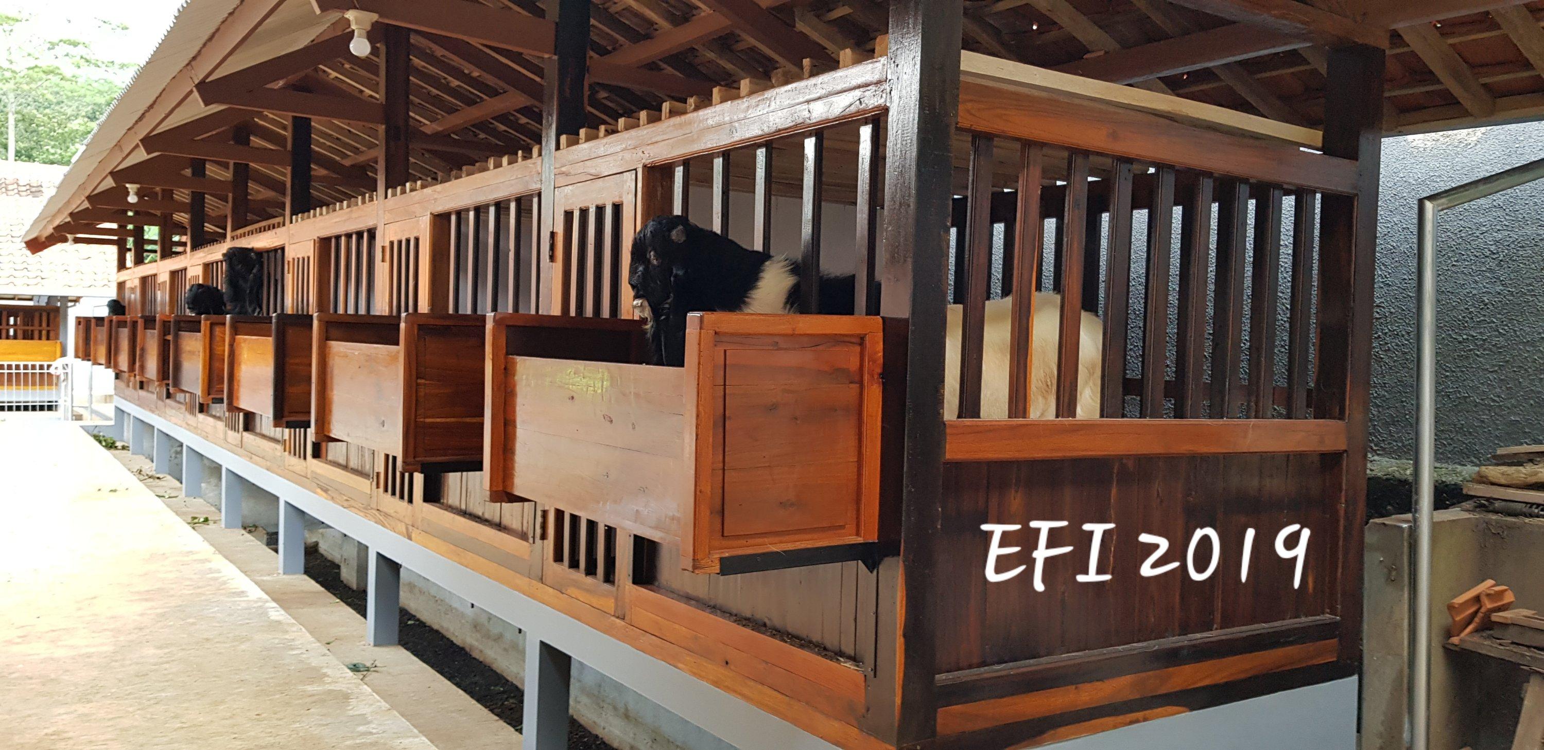 Kandang Kambing Etawa   Exotics Farm Indonesia
